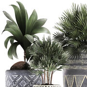 Decorative plants in flower pots for the interior 475 3d model