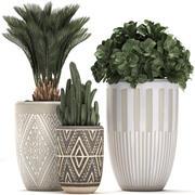 室内花盆装饰植物476 3d model