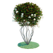 Photinia parachute 3d model
