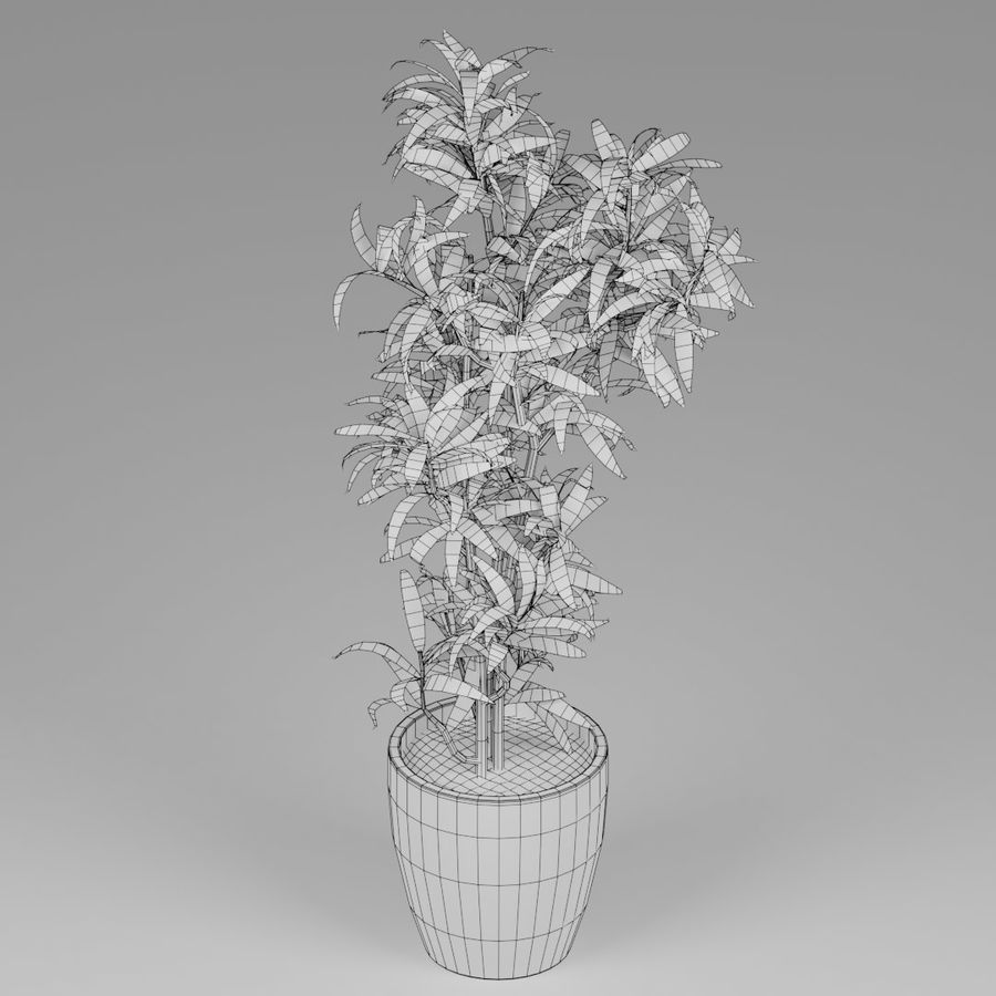 Small plant royalty-free 3d model - Preview no. 5