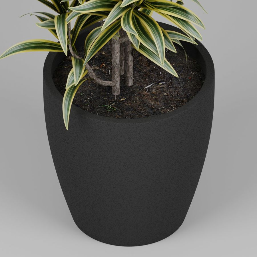 Small plant royalty-free 3d model - Preview no. 2