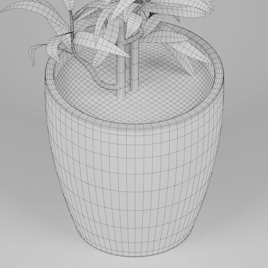 Petite plante royalty-free 3d model - Preview no. 9