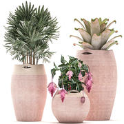 Rośliny ozdobne w doniczkach do wnętrz 479 3d model