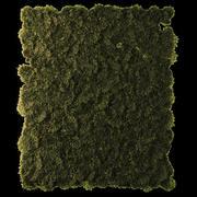 苔藓盘组低聚 3d model
