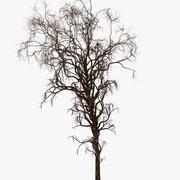 Fantasy Death Tree 3d model