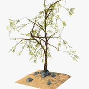 Exotische Pflanze 3d model
