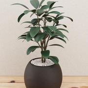 Home plant pot 3d model