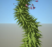 Planta de espinho 3d model