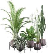 Plants collection 001 3d model