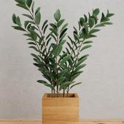 Planta em casa 3d model