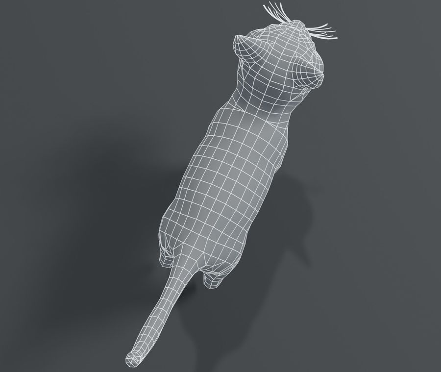Cartoon Cat Base Mesh 3D模型 royalty-free 3d model - Preview no. 18