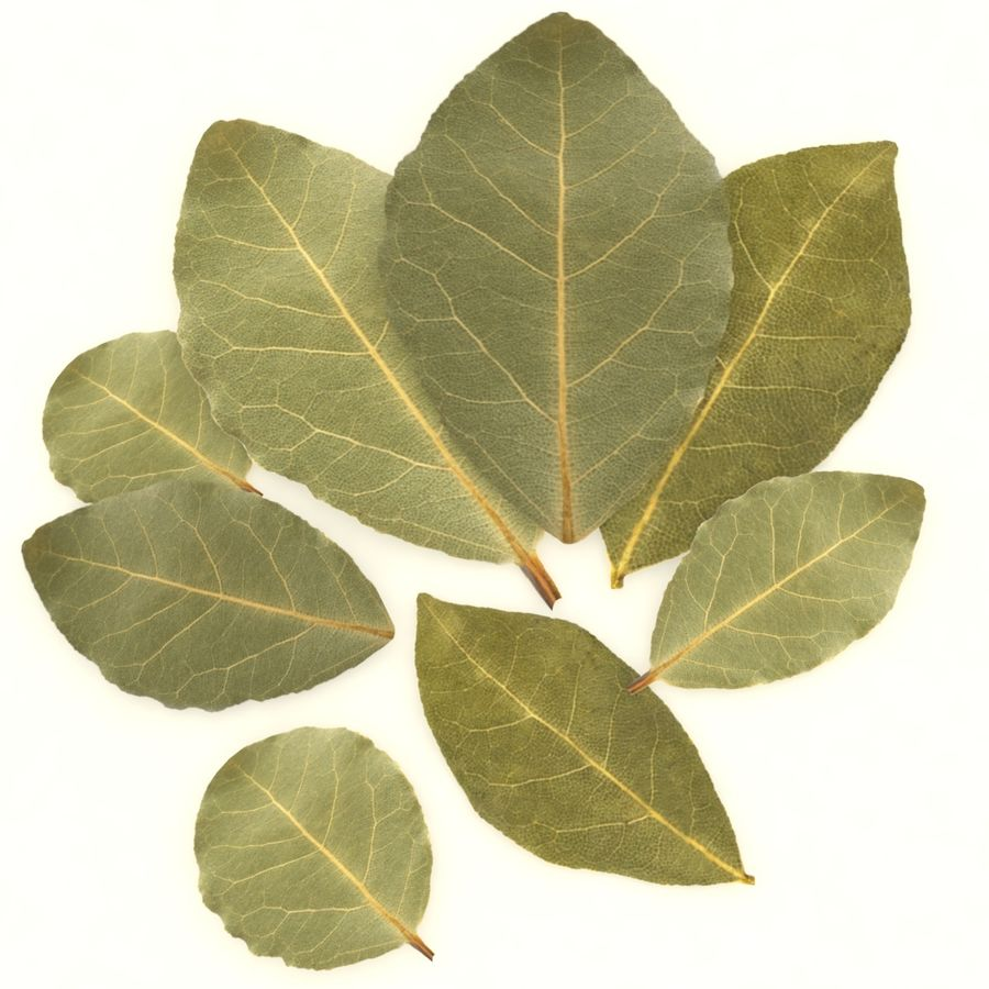 Bay leaf royalty-free 3d model - Preview no. 1