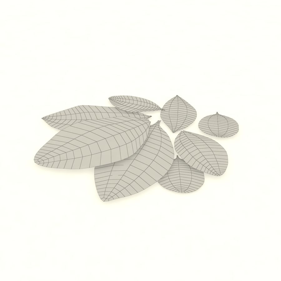 Bay leaf royalty-free 3d model - Preview no. 8