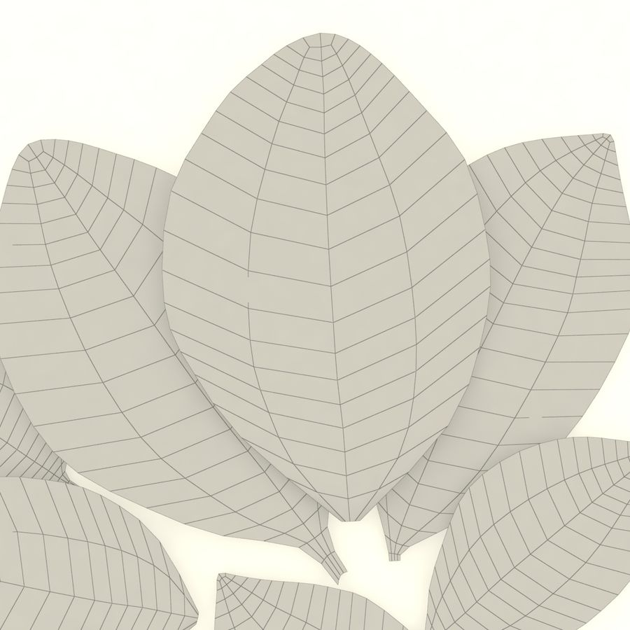 Bay leaf royalty-free 3d model - Preview no. 5