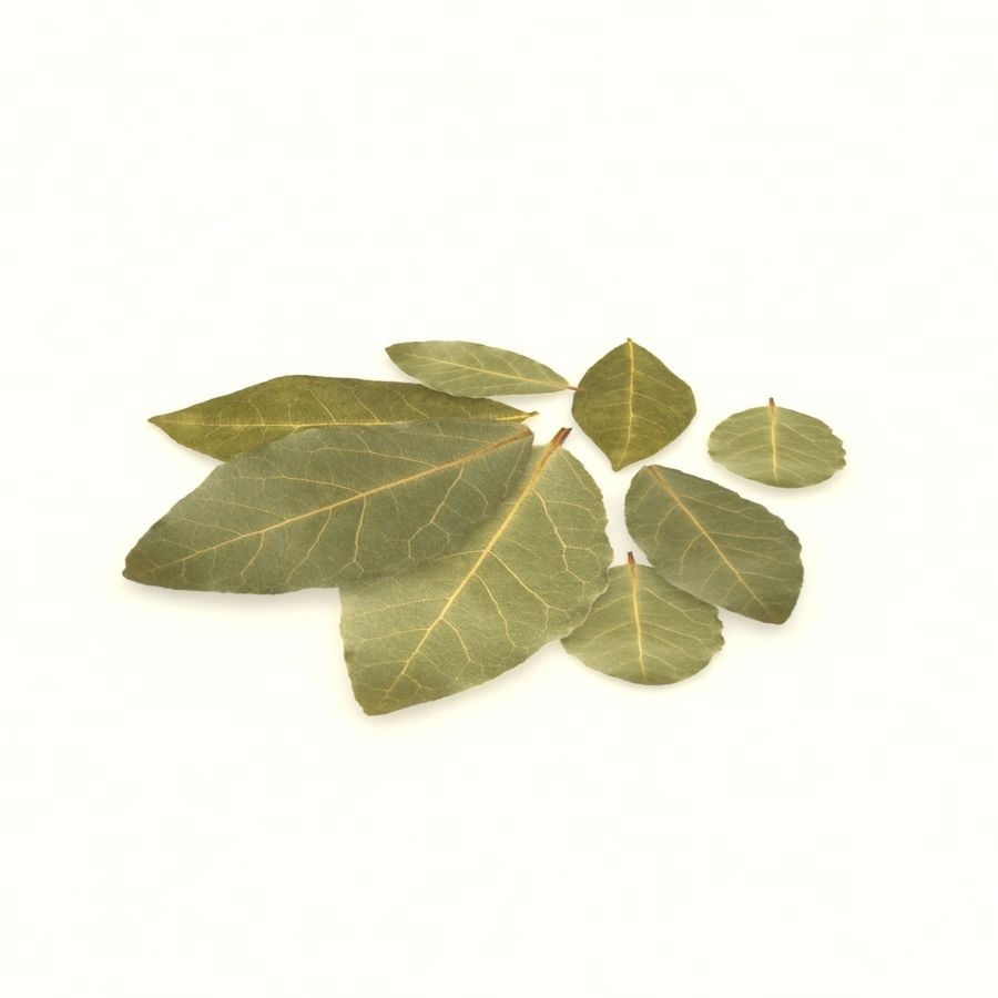 Bay leaf royalty-free 3d model - Preview no. 4