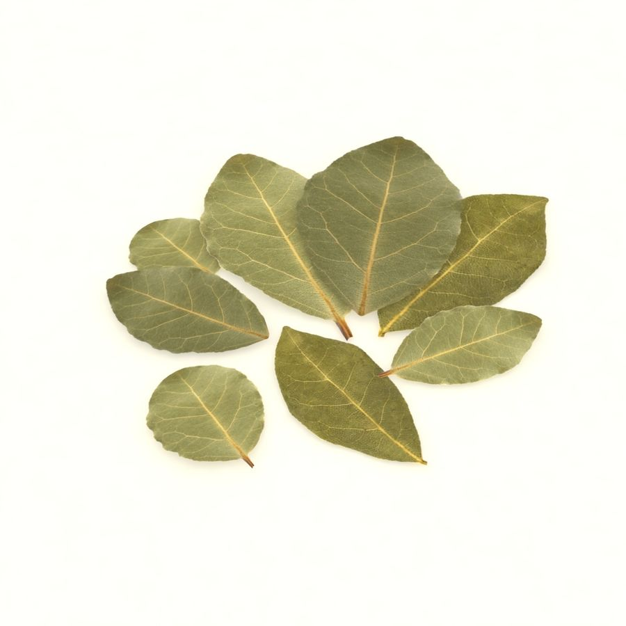 Bay leaf royalty-free 3d model - Preview no. 3