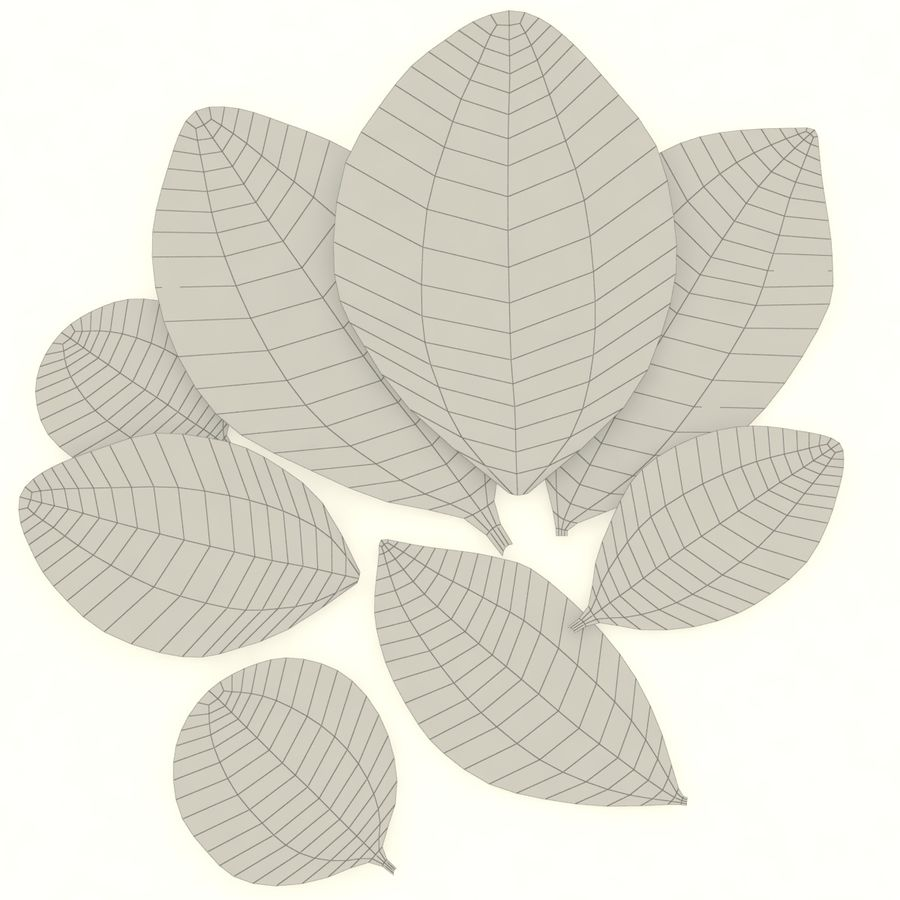 Bay leaf royalty-free 3d model - Preview no. 7