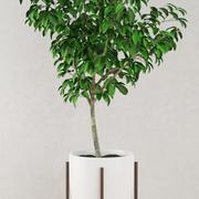Planta de árvore em vaso 3d model