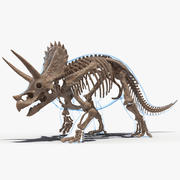 Triceratops Skeleton Fossil with Transparent Skin Rigged for Maya 3d model