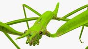 Insamling av krypande insekter 3d model