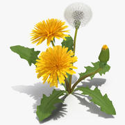 タンポポの植物Taraxacum Officinale 3d model