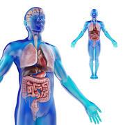 Modèle d'anatomie humaine masculine avec des organes internes avec des textures 4K 3d model
