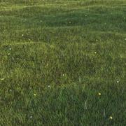 Gazon gras 3d model