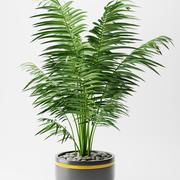 Planta de palmeira Areca 3d model