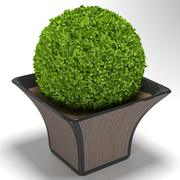 Bush in a cache-pot 3d model
