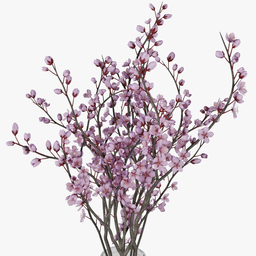 Plum blossom royalty-free 3d model - Preview no. 11