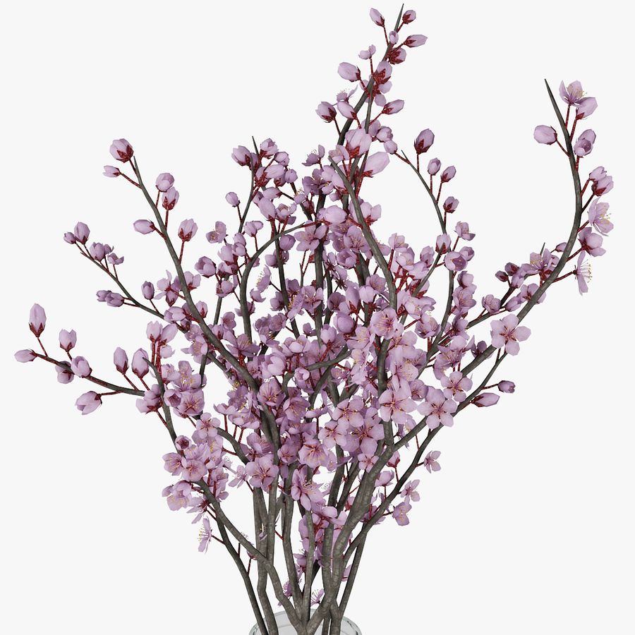 Plum blossom royalty-free 3d model - Preview no. 9
