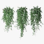 Ivy in pot 12 3d model