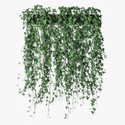 Ivy in pot 14 3d model