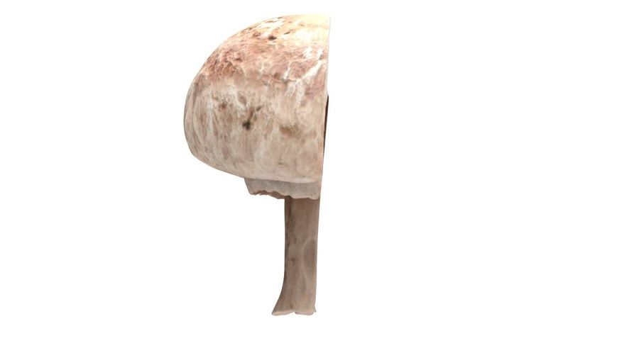 Champignon royalty-free 3d model - Preview no. 11