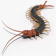 Giant Desert Centipede Scolopendra Heros Crawling 3d model