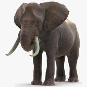Elefante animado para comer preparado para Maya modelo 3d