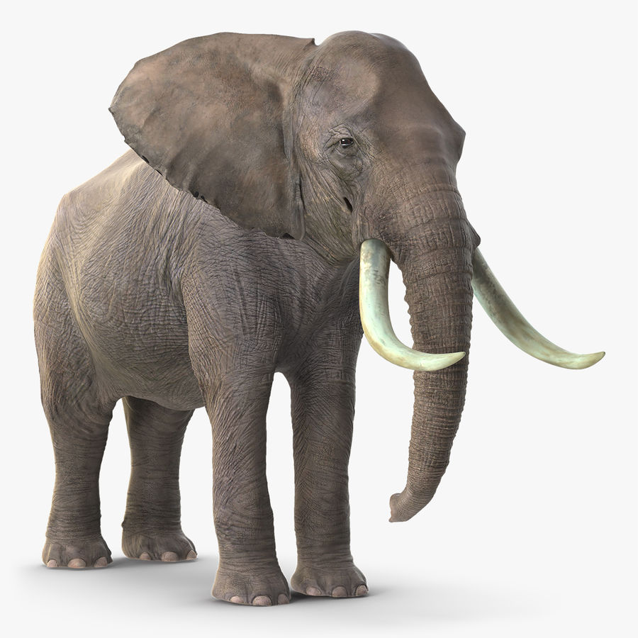 Animerad Elephant Waiting Rigged for Cinema 4D royalty-free 3d model - Preview no. 8