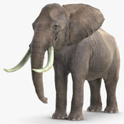 Animerad Elephant Waiting Rigged for Cinema 4D 3d model