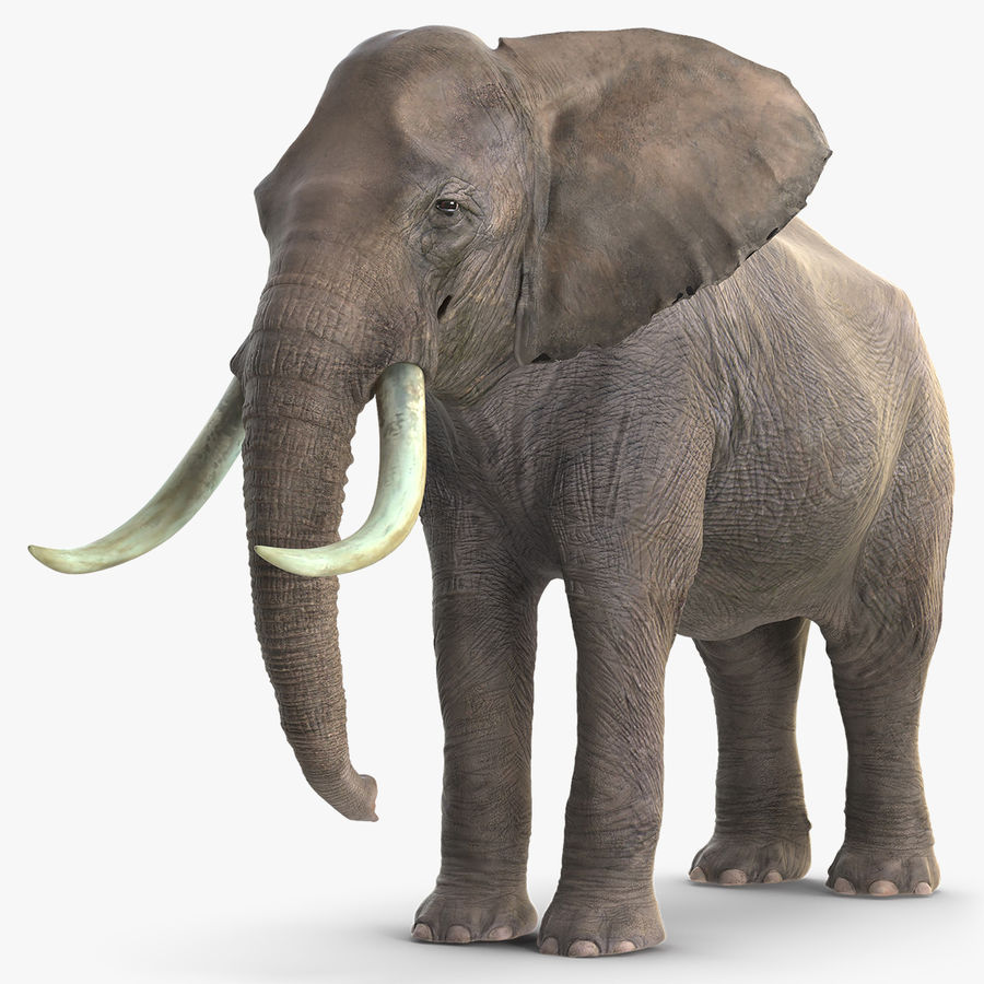 Animerad Elephant Waiting Rigged for Cinema 4D royalty-free 3d model - Preview no. 1