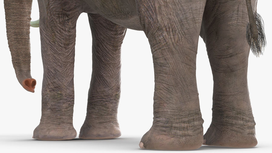 Animerad Elephant Waiting Rigged for Cinema 4D royalty-free 3d model - Preview no. 10