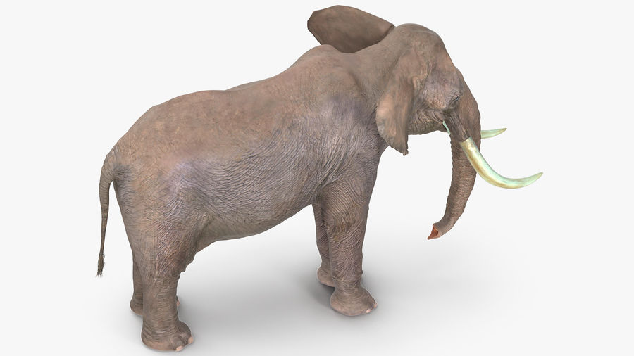 Animerad Elephant Waiting Rigged for Cinema 4D royalty-free 3d model - Preview no. 5