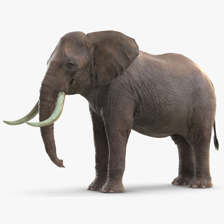 Animerad Elephant Waiting Rigged för Maya royalty-free 3d model - Preview no. 1