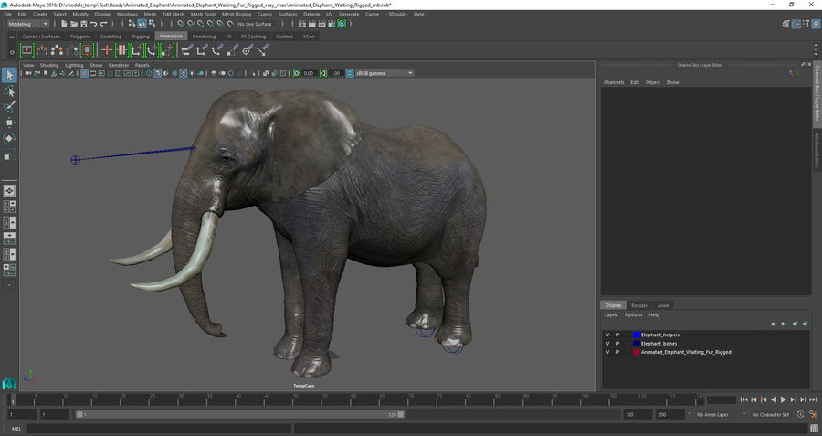 Animerad Elephant Waiting Rigged för Maya royalty-free 3d model - Preview no. 12