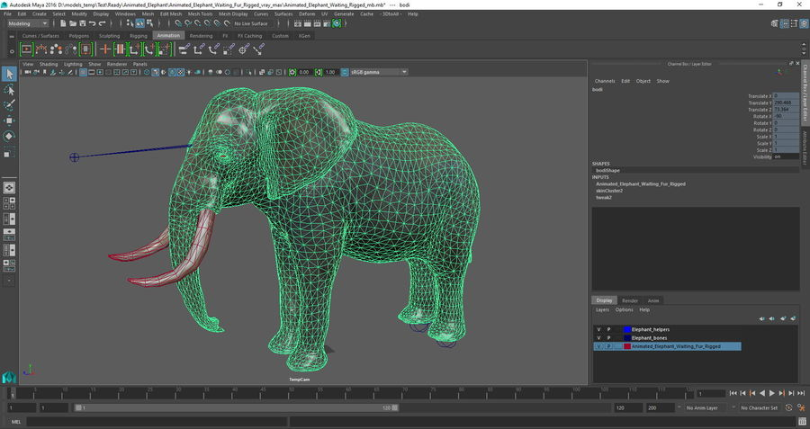 Animerad Elephant Waiting Rigged för Maya royalty-free 3d model - Preview no. 14