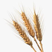 Buğday başak seti 3d model