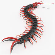 Scolopendra Subspinipes Mutilans Crawling 3d model