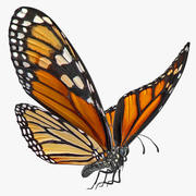 Papillon monarque volant animé monté pour Cinema 4D 3d model