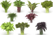 Set of bunches of herbs 3d model