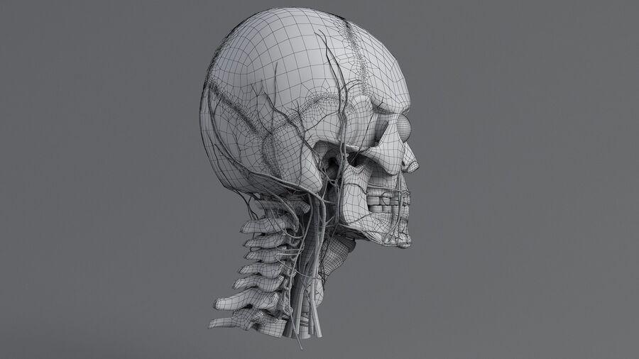 人間の頭の解剖学 royalty-free 3d model - Preview no. 54