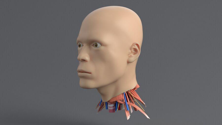 人間の頭の解剖学 royalty-free 3d model - Preview no. 3